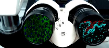 Màster Interuniversitari en recerca en Ciències de la Visió